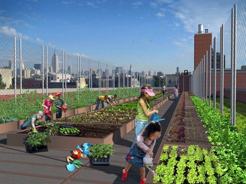 Carrot City NYC Rooftop School Gardens School garden