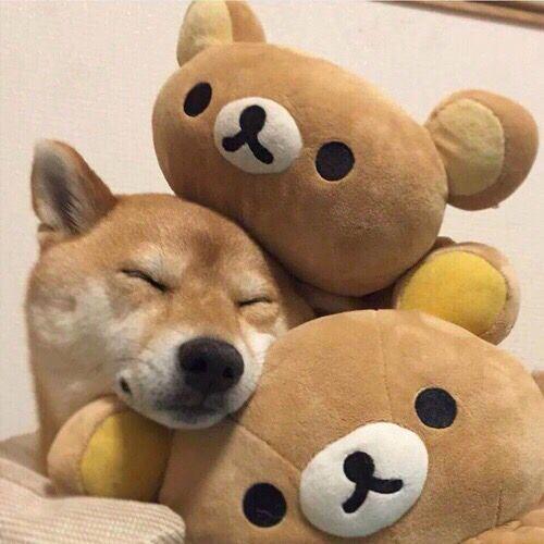 Most Inspiring Rilakkuma Anime Adorable Dog - 5b0f0a78e909b19cb286a0544f8b9320  Snapshot_659992  .jpg