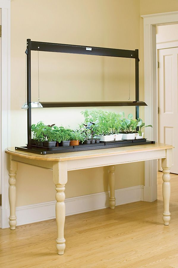 Tomato Grow Lights Explained For Indoor Gardening Seed
