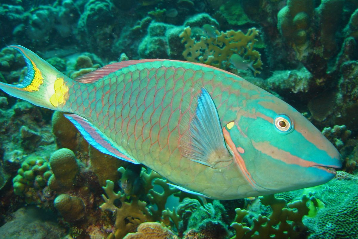 17 best ideas about parrot fish on pinterest, Reel Combo
