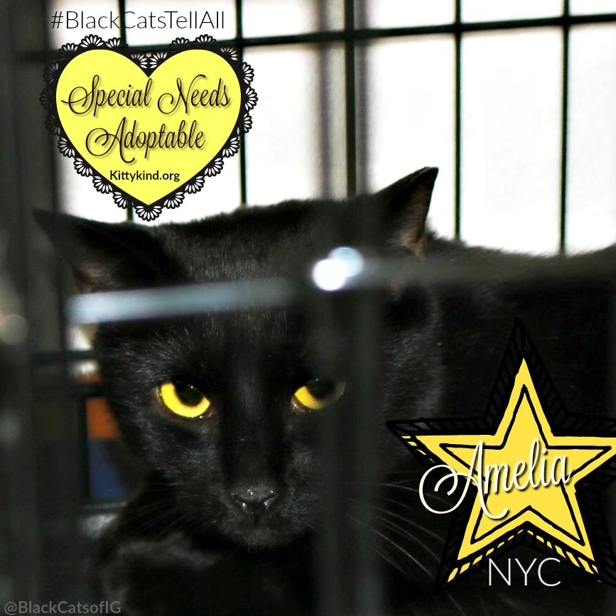 special needs black cat Amelia #nyc @kittykind @catwisdom101