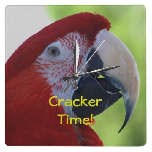 "$26.95 Green Wing Macaw Cracker Time! Wallclocks. What time is it? It's Cracker Time! Princess, the Green Wing Macaw, showing off for the camera. Beautiful bright red crested head, with green and blue feathers on her wings. These gorgeous birds will live to approximately 125 years in captivity. From the Macaw family, but often referred to as a parrot because of their ability to mimic, or ""talk""."