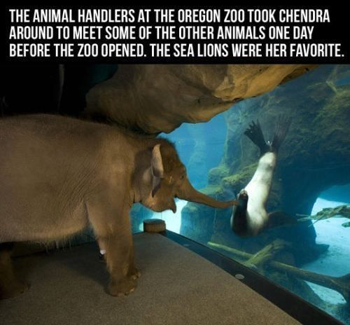 An elephant touring the zoo.
