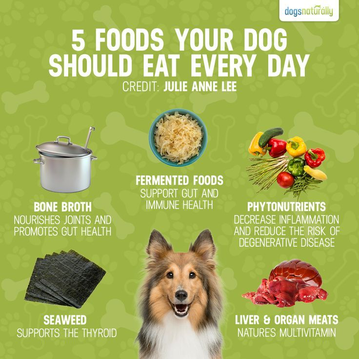 Good for your dog ... every day! #dogs #dogfood #doghealth