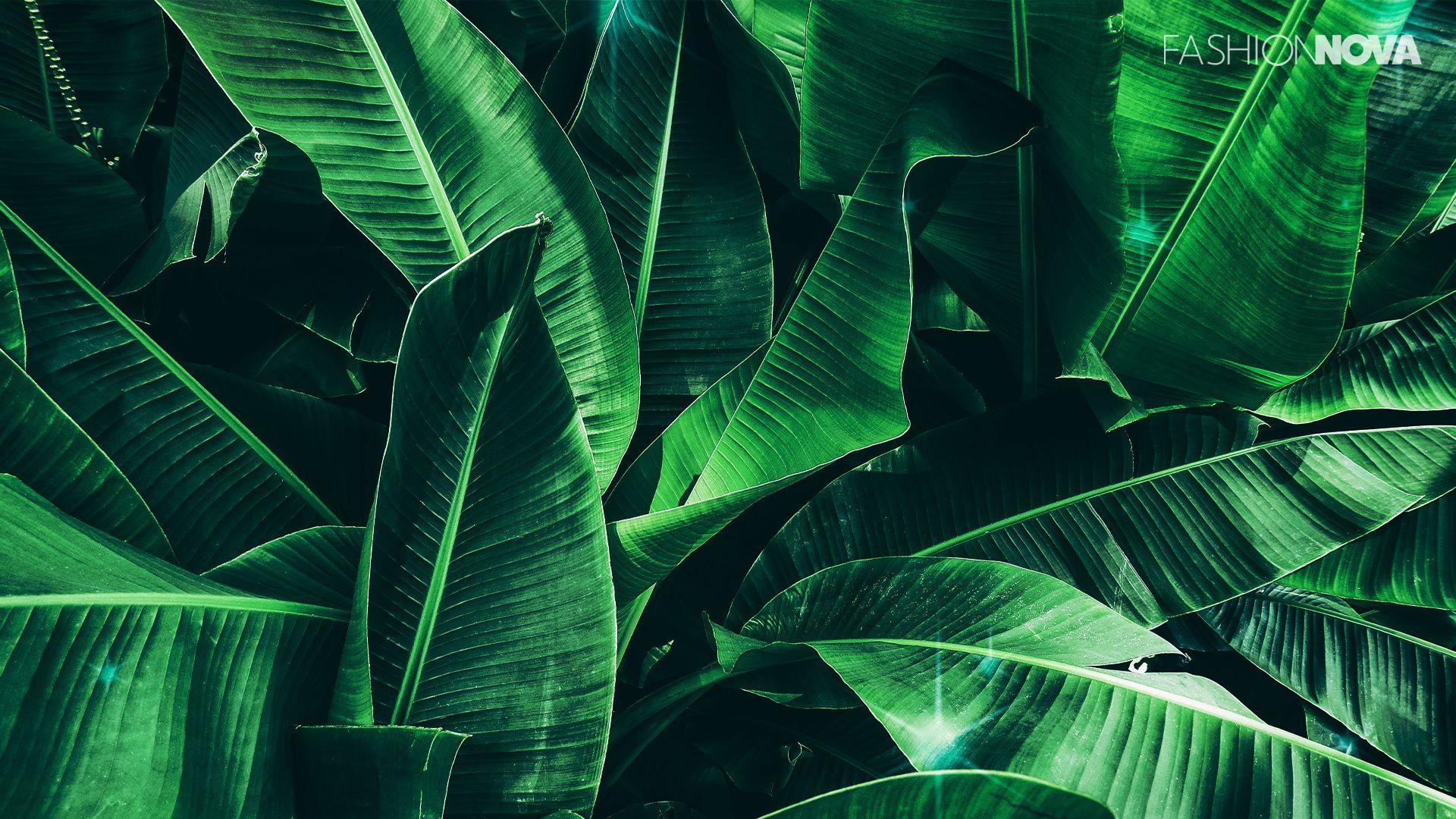Zoom Background Banana Leaves Leaf Texture Dark Green Background Dark Green Aesthetic