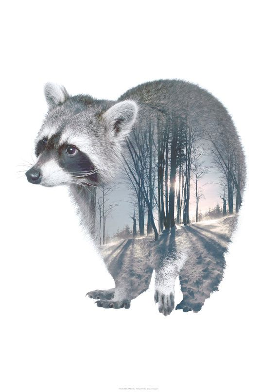 Raccoon Animal Double Exposure Art Print Faunascapes By Whatwedo Raccoon Art Animal Wall Art Animal Art
