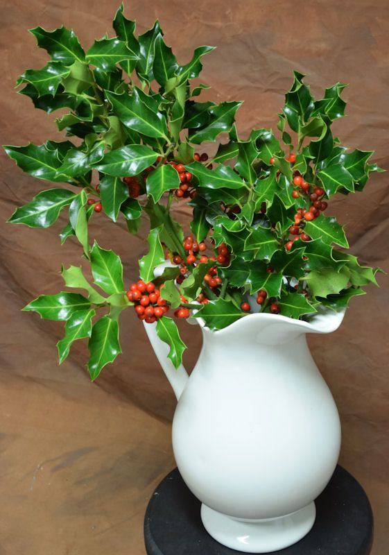 9 99 Preserved Fresh Holly Branches Beautiful Centerpieces