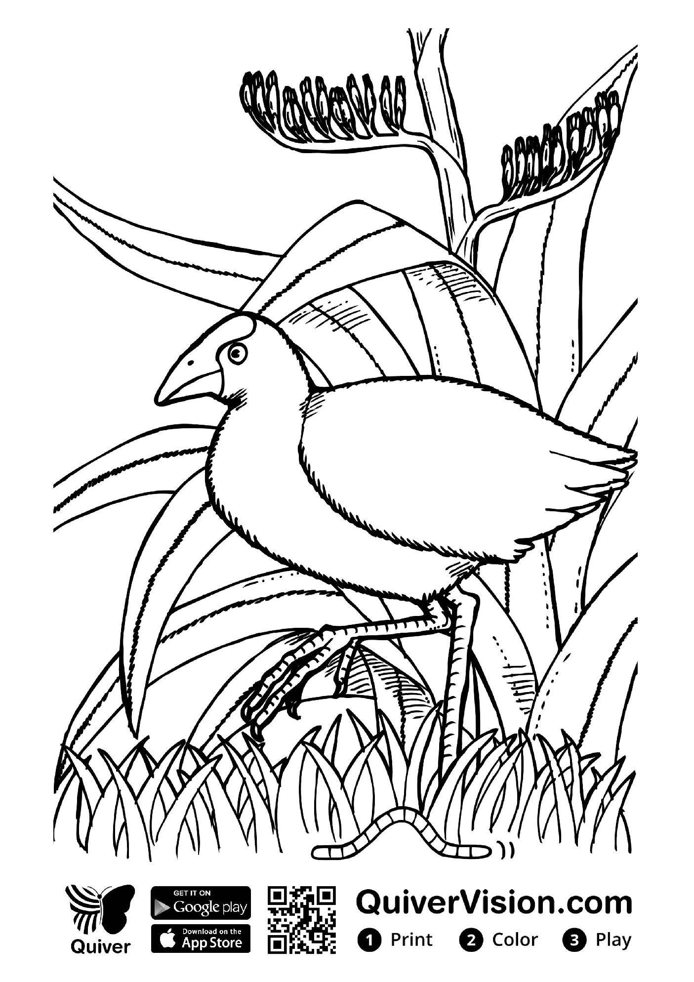 Image Result For Quivervision Coloring Pages Boyama Sayfalari 3d Boyama Artirilmis Gerceklik