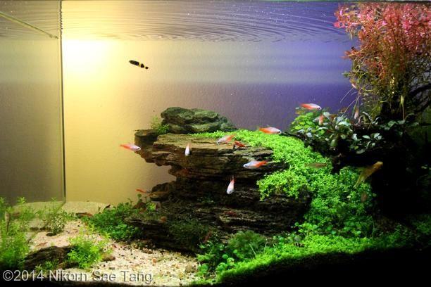 2014 aga aquascaping contest entry 236 aquarium ideas. Black Bedroom Furniture Sets. Home Design Ideas
