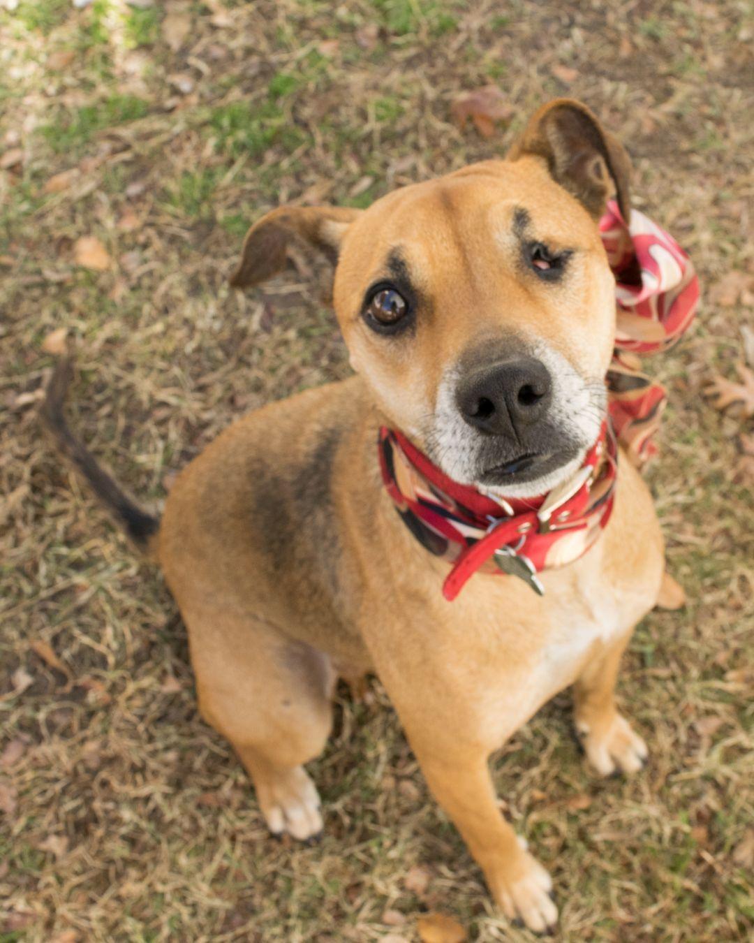 Adopt Sugar On Petfinder Help Homeless Pets Adoption Dog Adoption