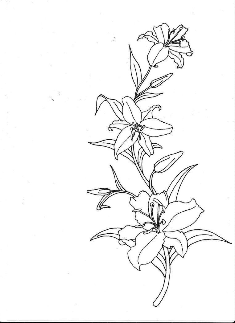 Lilytattoodesignbydionnekeg 7621048 tattoo inspiration lilytattoodesignbydionnekeg 7621048 lilies tattootattoo flowersstargazer dhlflorist Images