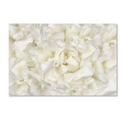 """Trademark Art White Peony Flower by Cora Niele Photographic Print on Wrapped Canvas Size: 22"""" H x 32"""" W x 2"""" D"""