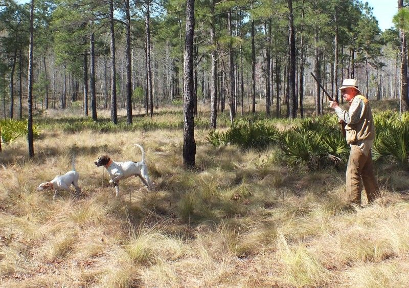 Review Southern Woods Plantation Quail Hunting Preserve