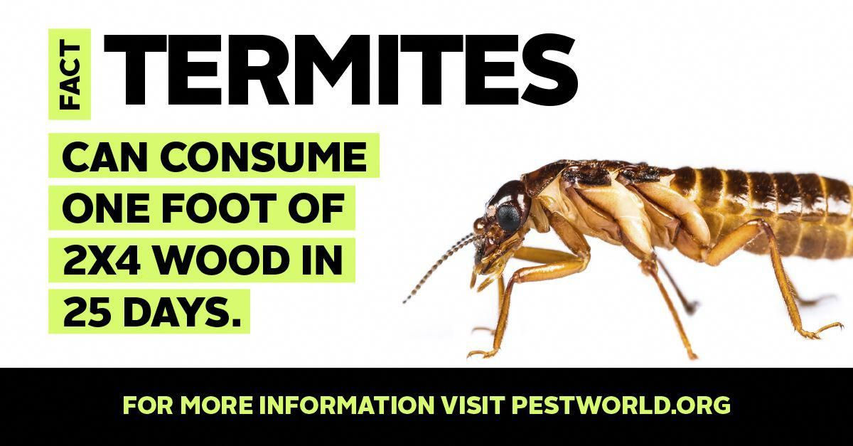 Park Art|My WordPress Blog_Where Do Termites Come From In The House