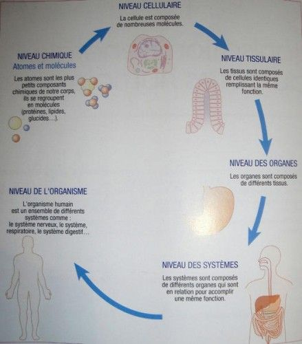 Skynet Be Le Portail Belge De Belgische Portaalsite Cap Esthetique Biologie Esthetique