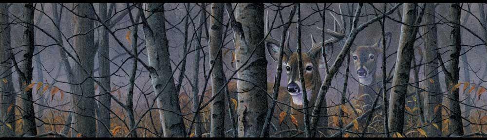 Deer In Woods Wallpaper Border
