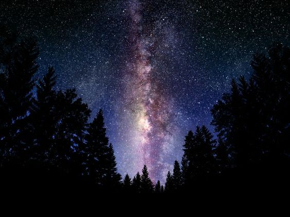 Night Sky Outere Trees Forest Night Sky 1600x1200 Wallpaper