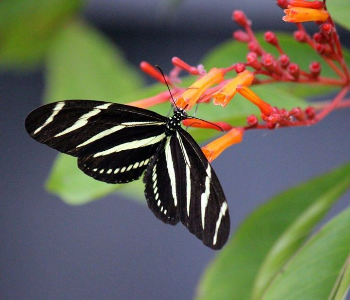 Belleza Insects Butterfly Moth