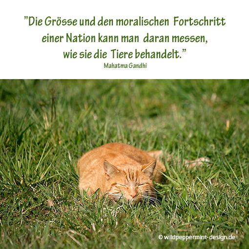 Zitat Von Mahatma Gandhi Tiere Katze Www Wildpeppermint Desing