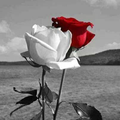Fotos De Amor Bonitas Sin Frases Buscar Con Google El Amor Es