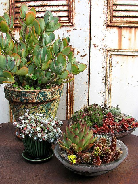 Dish gardens succulent containers - Dish garden containers ...