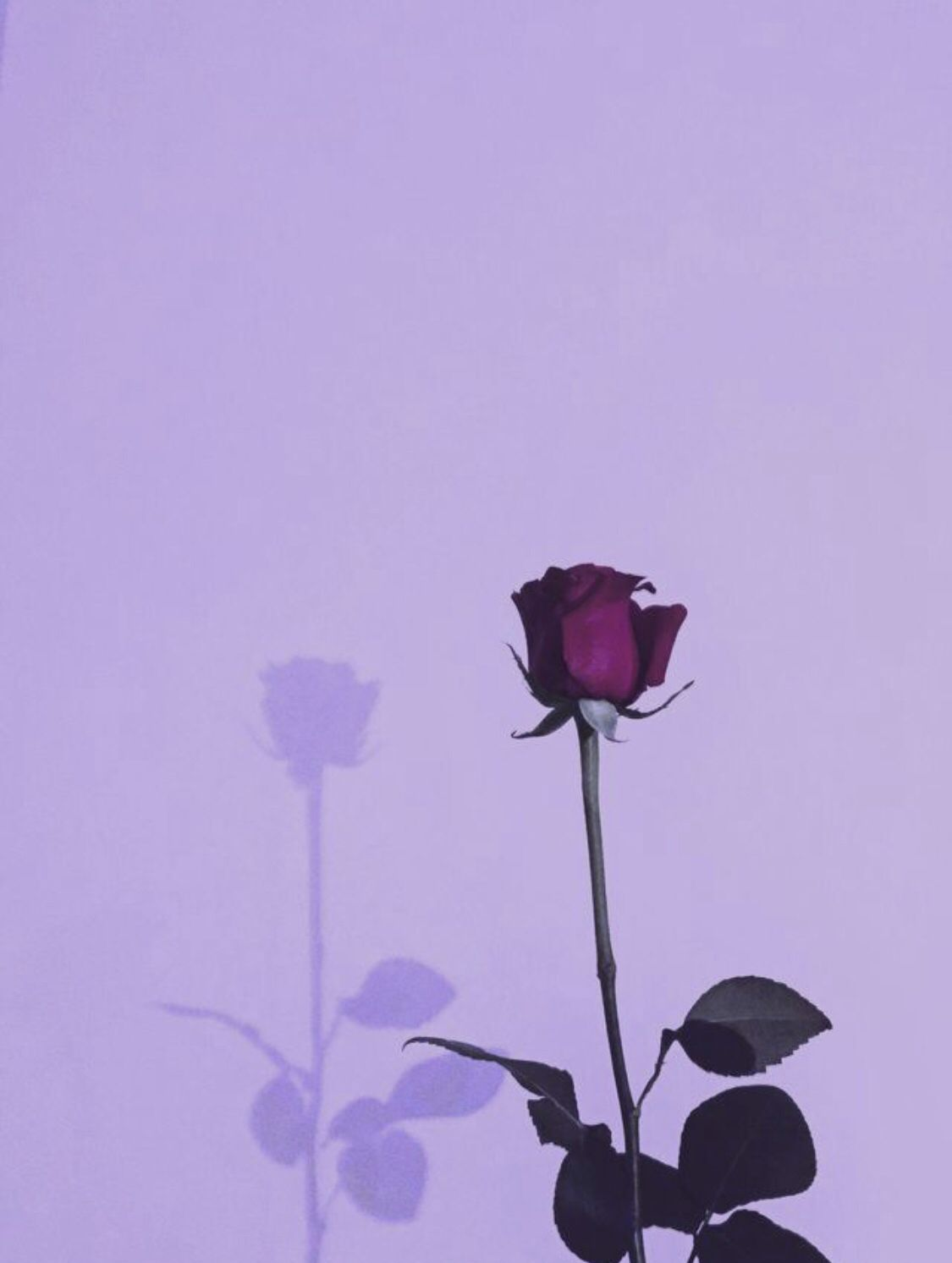 Aesthetic Pinterest Pictures Purple | Quotes and Wallpaper K