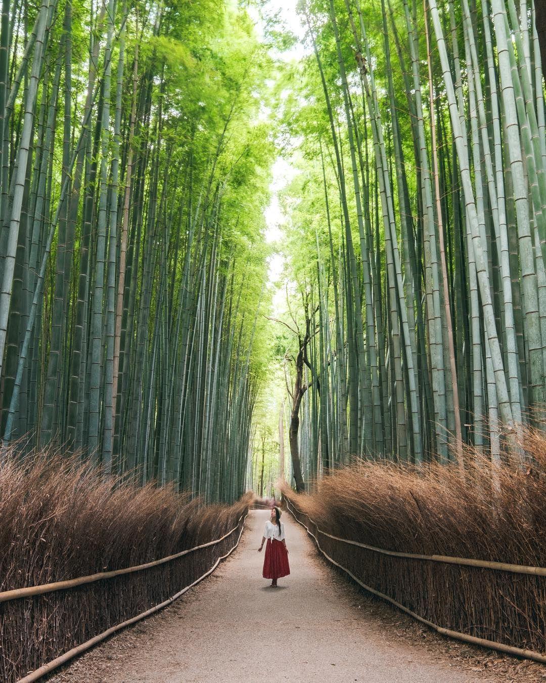 Arashiyama Bamboo Forest by Sarah & Eric