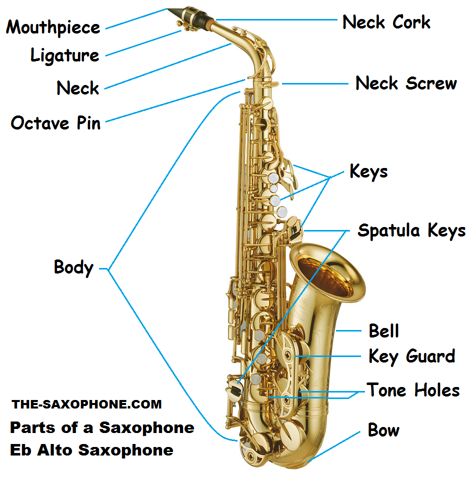 5b1793586719e3b3e6dbce731f3ada9f saxophone diagram for kids google search saxophone saxophone