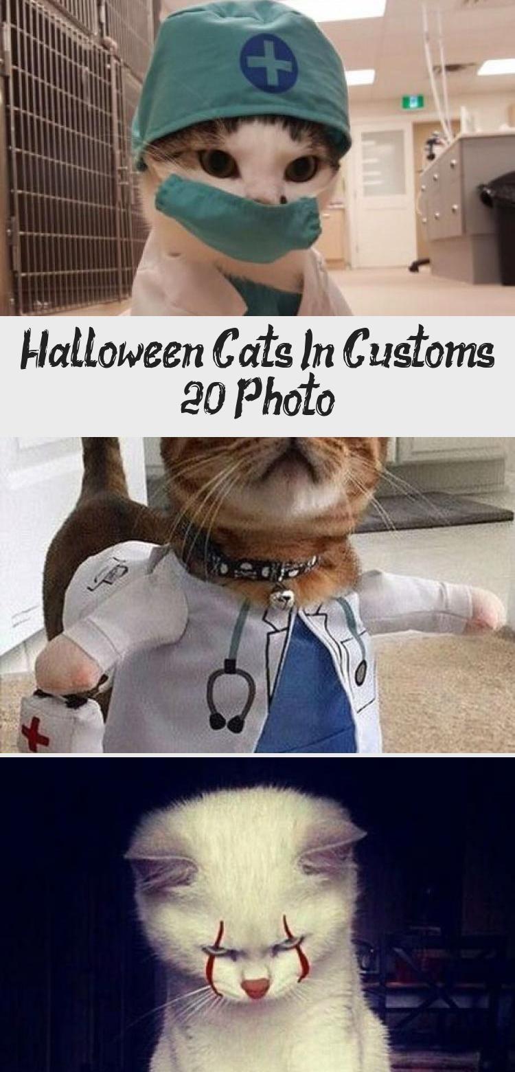 Halloween-Katzen im Zoll (20 Foto) - LOL WARUM #KatzeBasteln #KaterKatze #KatzeC ... #katzengeburtstag