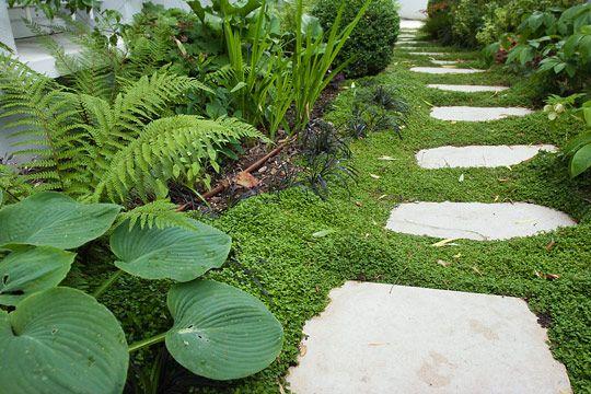Jardin d 39 ombre garden pinterest nuances pas for Amenagement jardin ombre