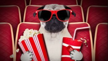Human Foods That Dogs Can & Can't Eat | Can Dogs Eat Popcorn?