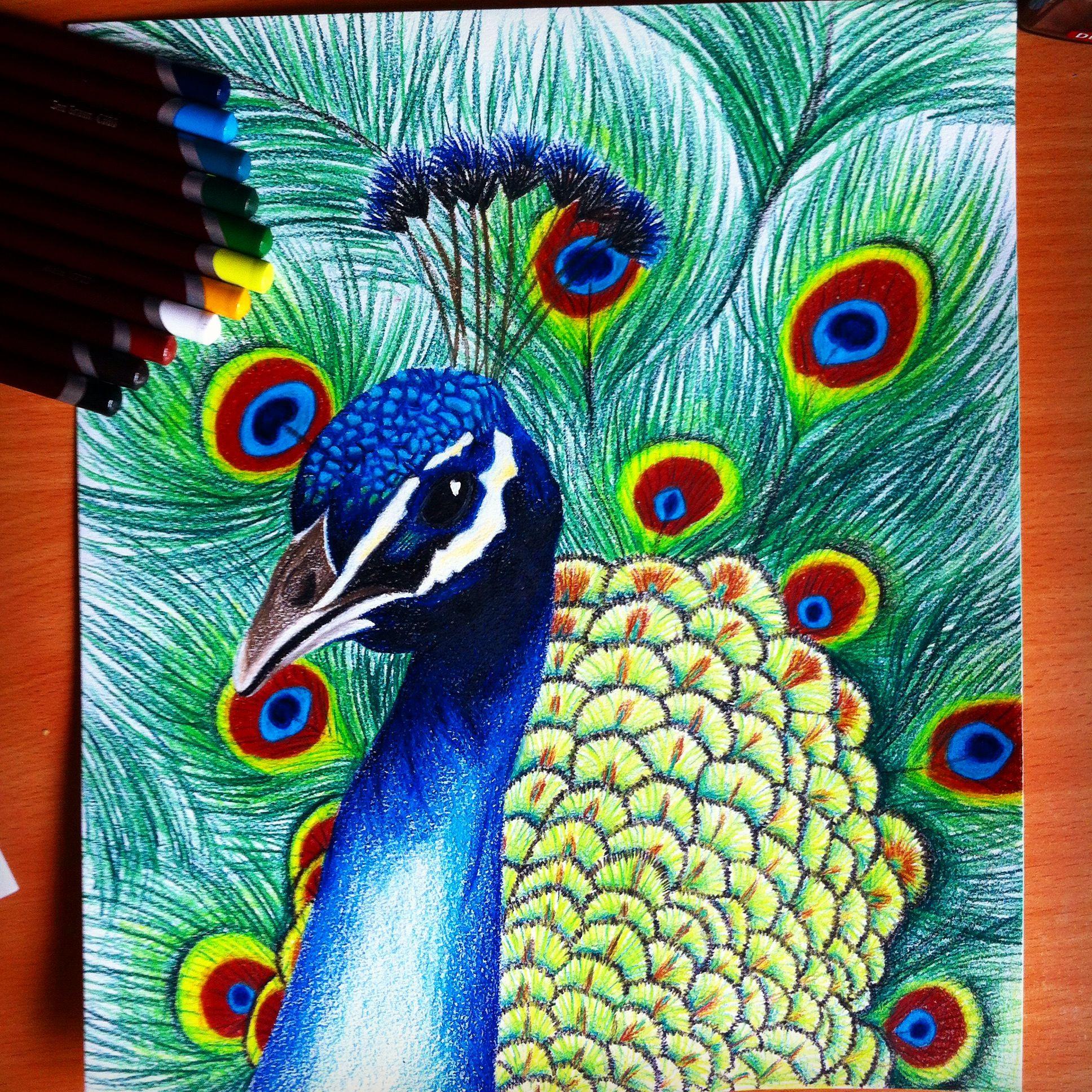 Peacock Drawing Peacock Painting Peacock Art Bird Art