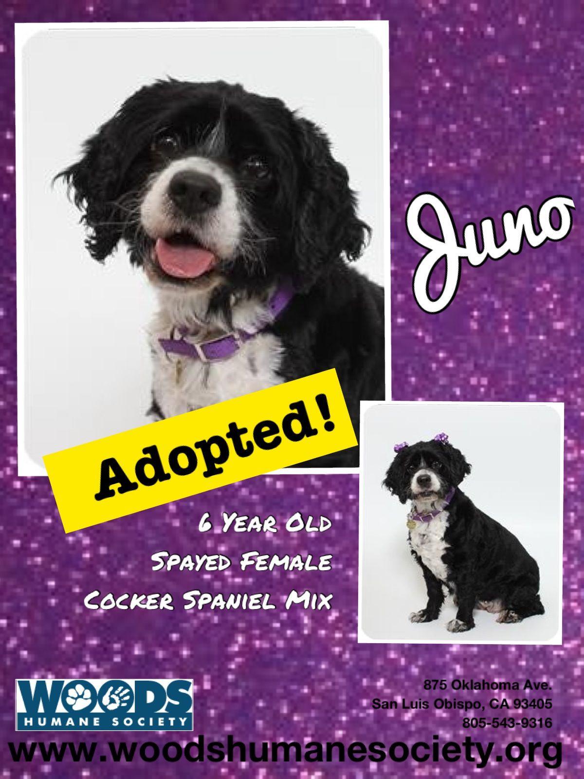 Vizsla Puppies For Adoption In California 2021