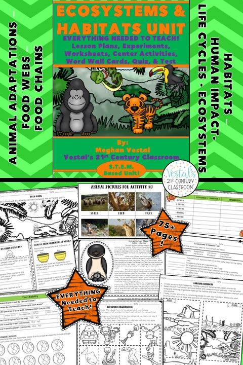 Ecosystems & Habitats {Digital & PDF Included} Ecosystem