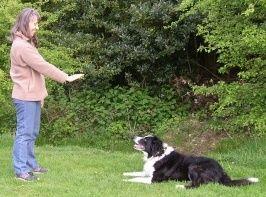 Basic Dog Commands Canine Boot Camp Dog Training House