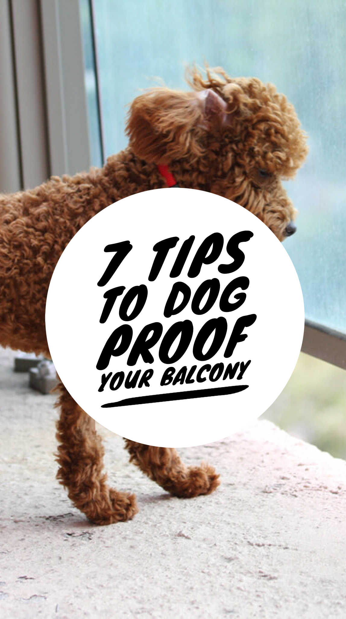 7 Things You Need To Do To Dog Proof Your Balcony Balcony For Dogs Dog Safe Apartment Dogs