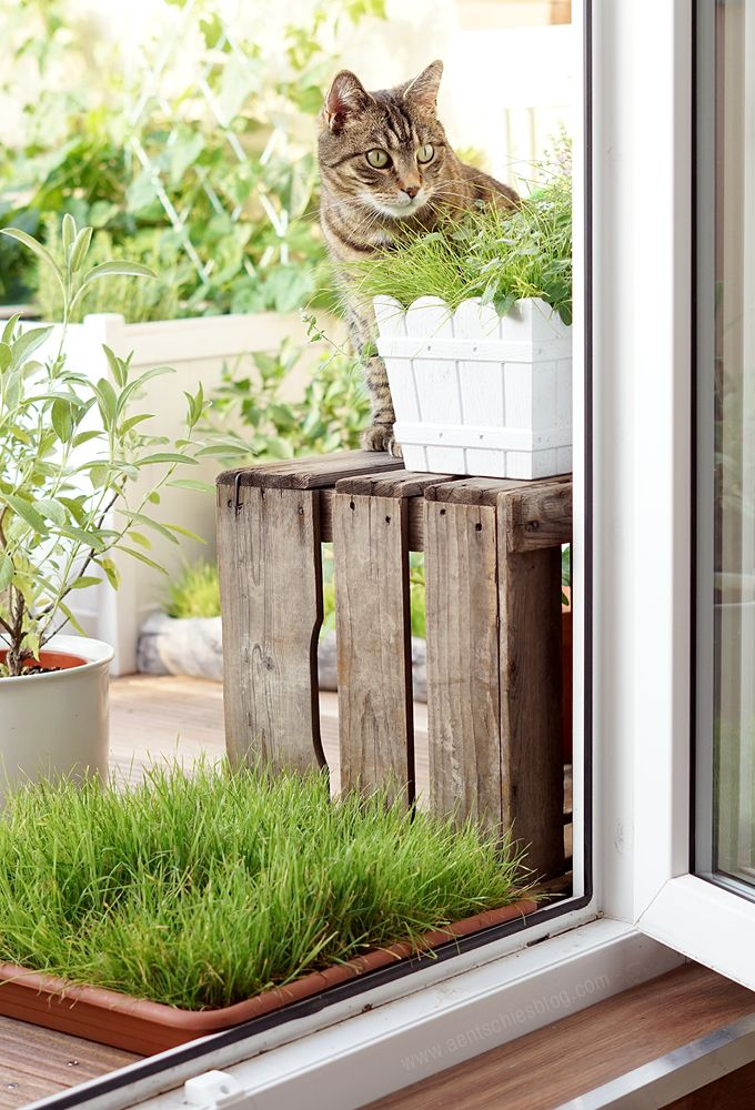 unser katzenbalkon die pflanzen katzen katze balkon katzengras und balkon. Black Bedroom Furniture Sets. Home Design Ideas
