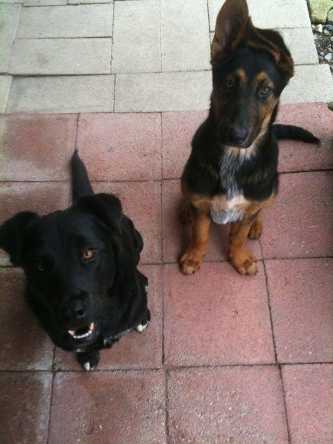 Such cute puppies! @Lacey Preston