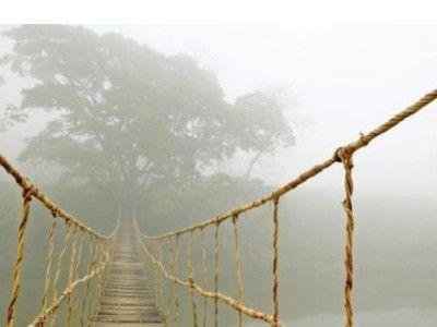 IKEA Jungle Journey Rope Bridge Picture Photo Art Canvas | Gift ...
