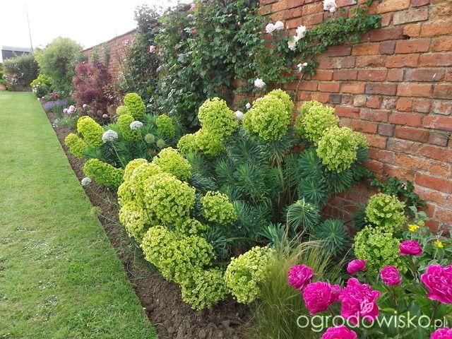 Rabaty Kwiatowe Przydomowe Szukaj W Google Garden Planning Plants Garden