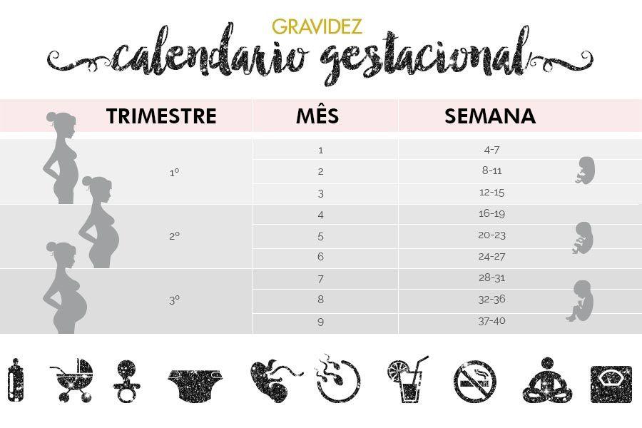 Calendario Gestacional Como Calcular Semanas Meses E Trimestres