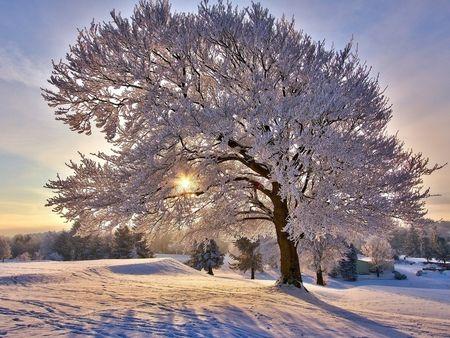 Pretty Winter Tree D