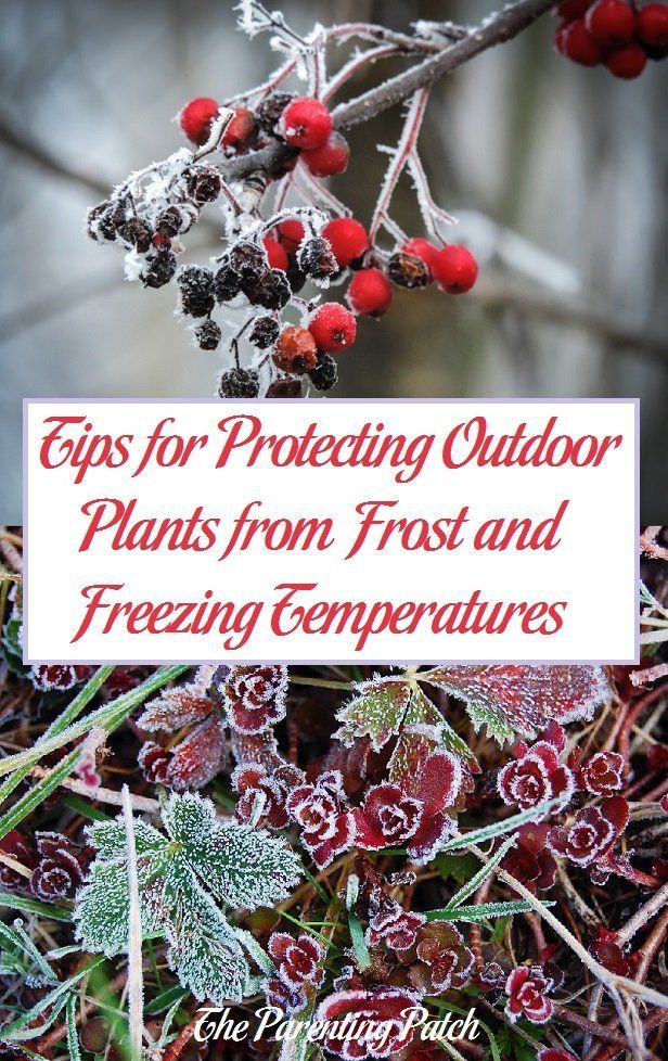 Tips For Protecting Outdoor Plants From Frost And Freezing 400 x 300