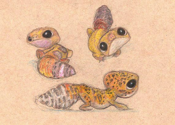#leopardgeckos