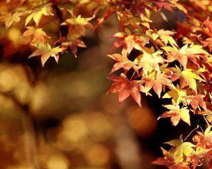*perdido en el otoño