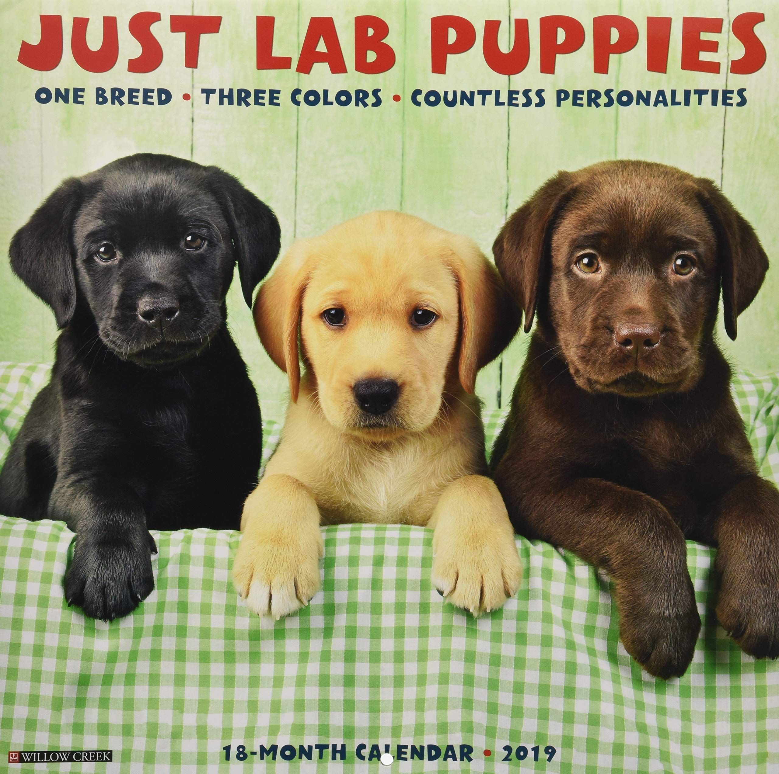 Just Lab Puppies 2019 Wall Calendar Dog Breed Calendar Calendar Wall Calendar July 15 2018 Wall Calendar Lab Puppie Lab Puppies Puppies Dog Breeds