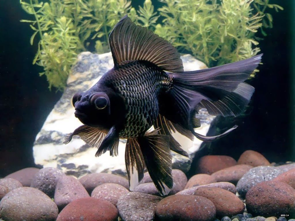 Freshwater fish looks like dolphin - Tropical Freshwater Fish Find Incredible Deals On Tropical Freshwater Fish And Tropical Freshwater Fish Accessories Let Us Show You How To Save Money On