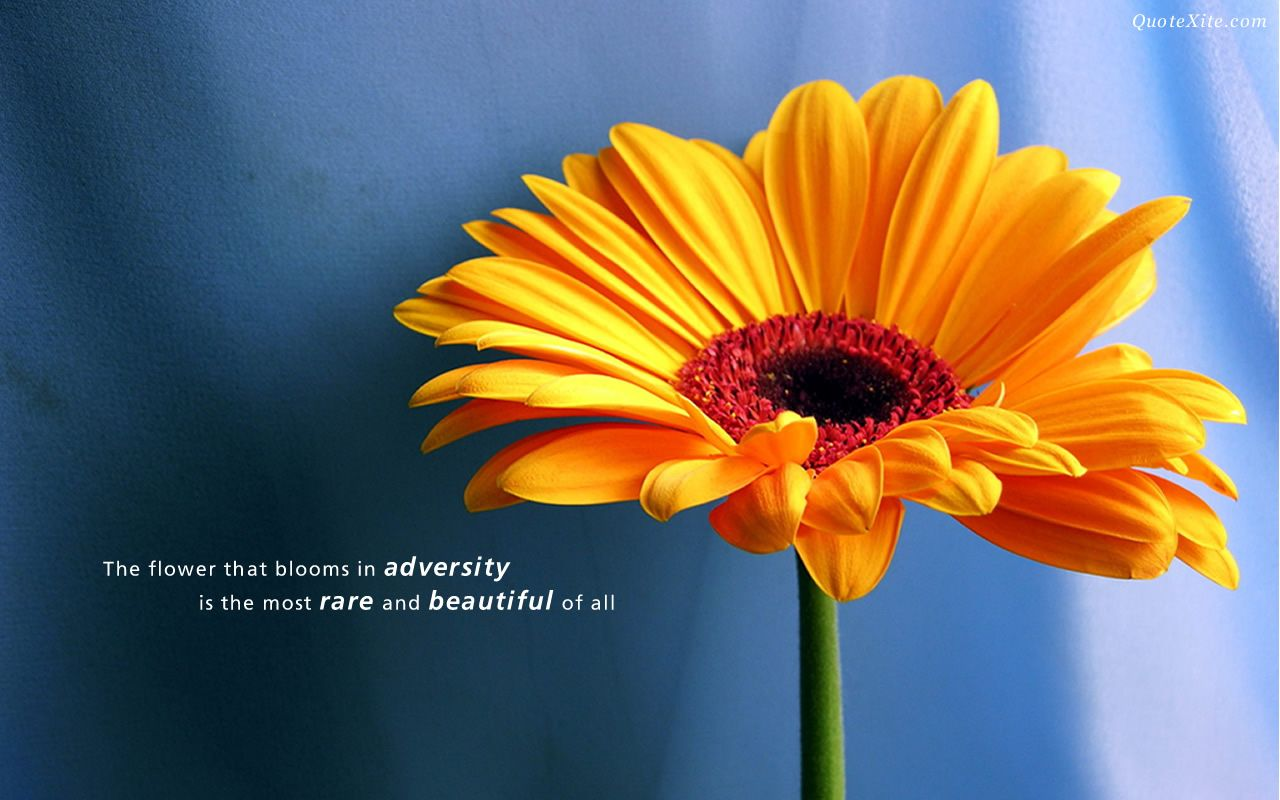 The Yellow Wallpaper Meaningful Quotes Awesome 61 Meaningful Pictures With Some Inspirational