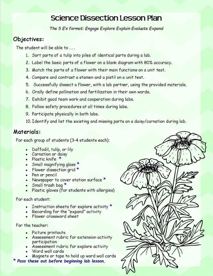 of a Flower Dissection Lab Lesson Plans and Handouts