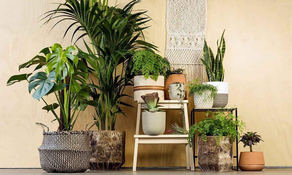 Pin By Hannie Duppen On افكار للمطبخ Hall Decor Best Indoor Plants Entry Way Design